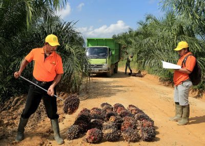 Cultivating Palm Fruits