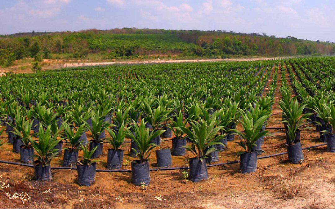 Prime Planting in Kendari