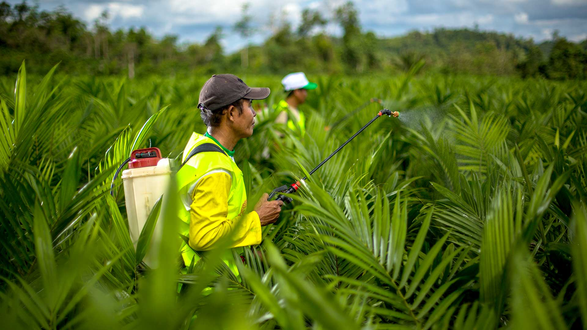 pestel analysis oil palm plantation Exploitative labor practices in the global palm oil of palm oil to the global economy the analysis demonstrates onoilpalmplantations.